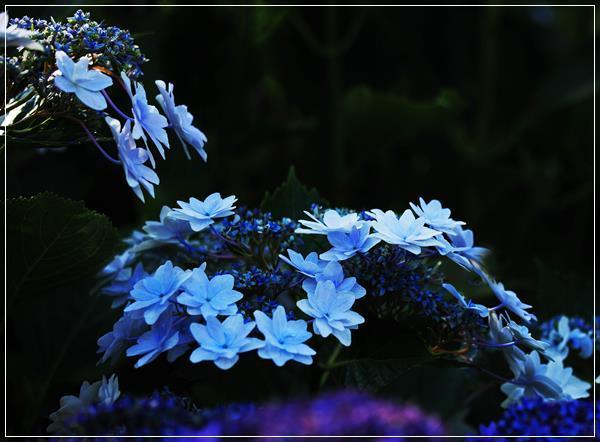 9IMG_1371.jpg